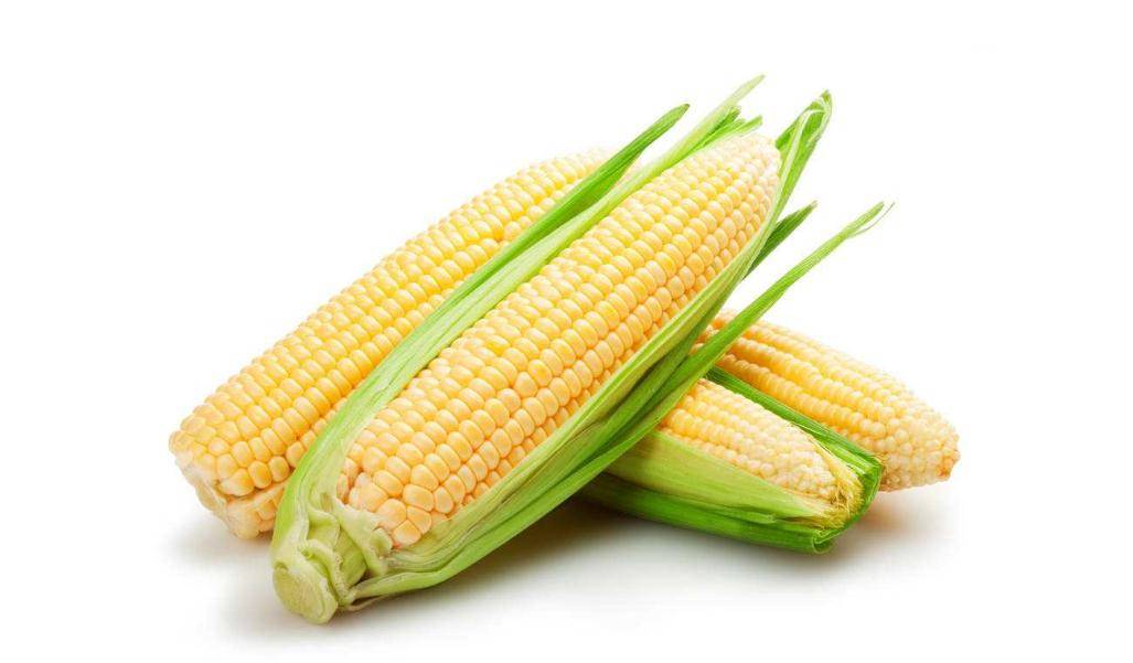 玉米肽酶解工艺及性状