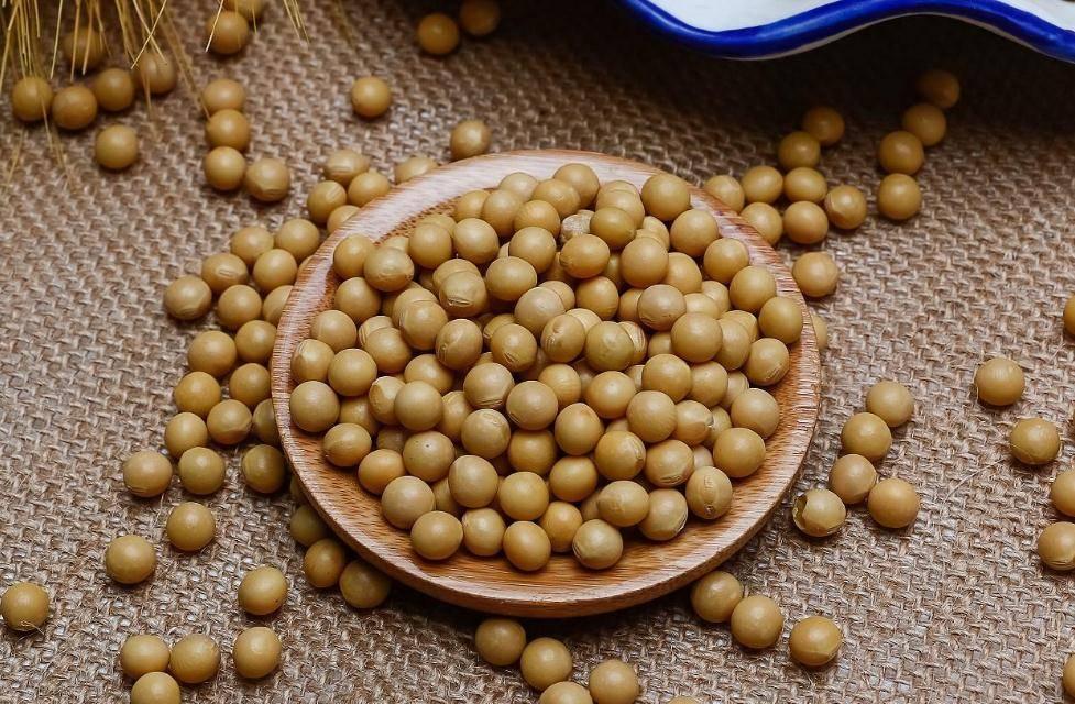 大豆及豆制品的营养价值
