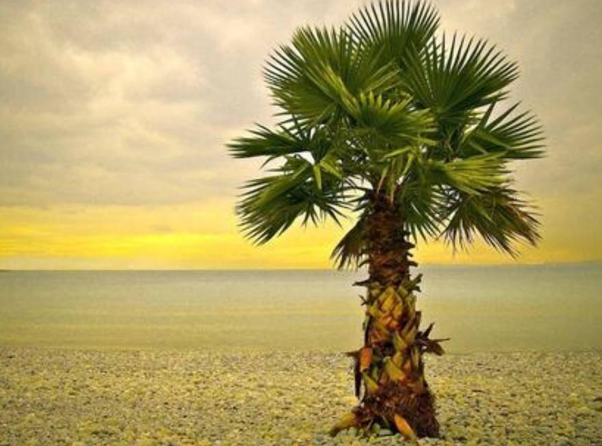 棕榈肽的制备及其特性